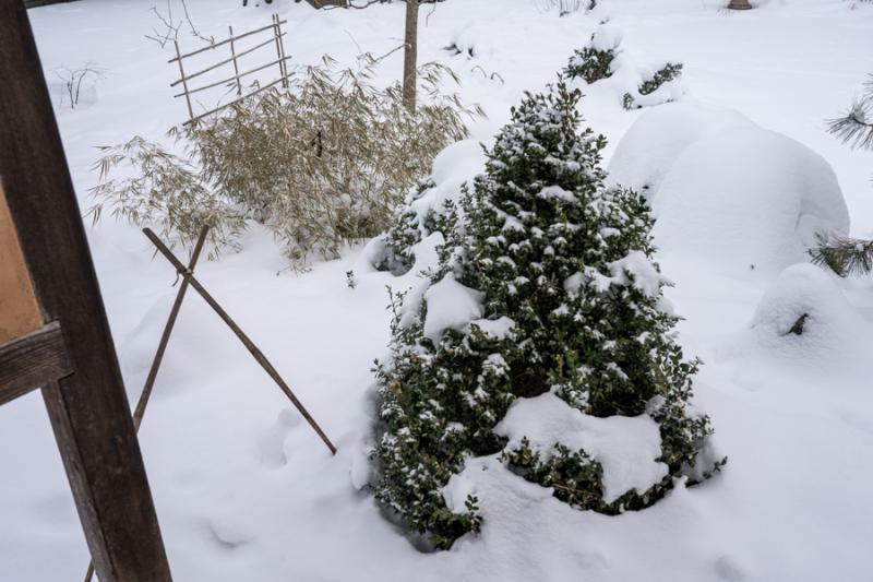 Egungun and Snow-22