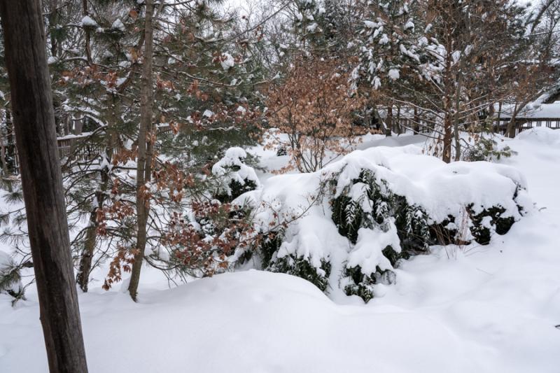 Egungun and Snow-21