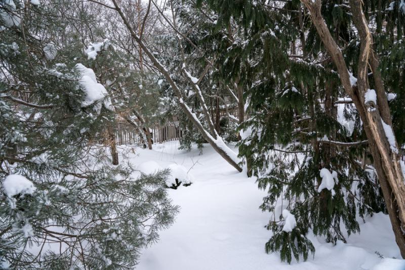 Egungun and Snow-29