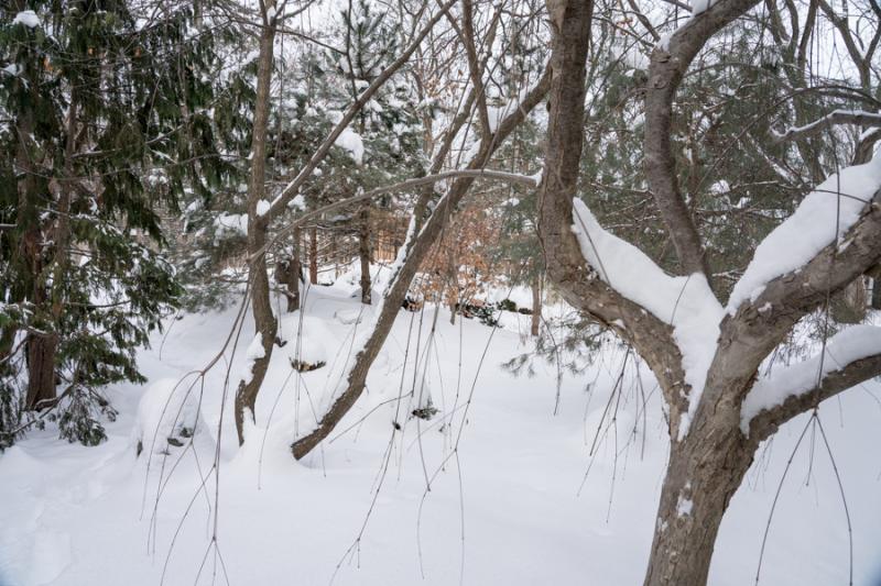 Egungun and Snow-32