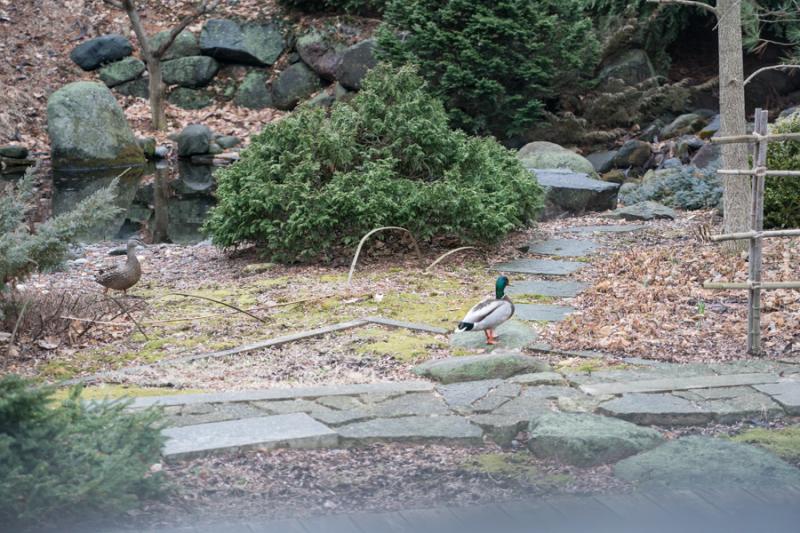 Ducks 2018-2