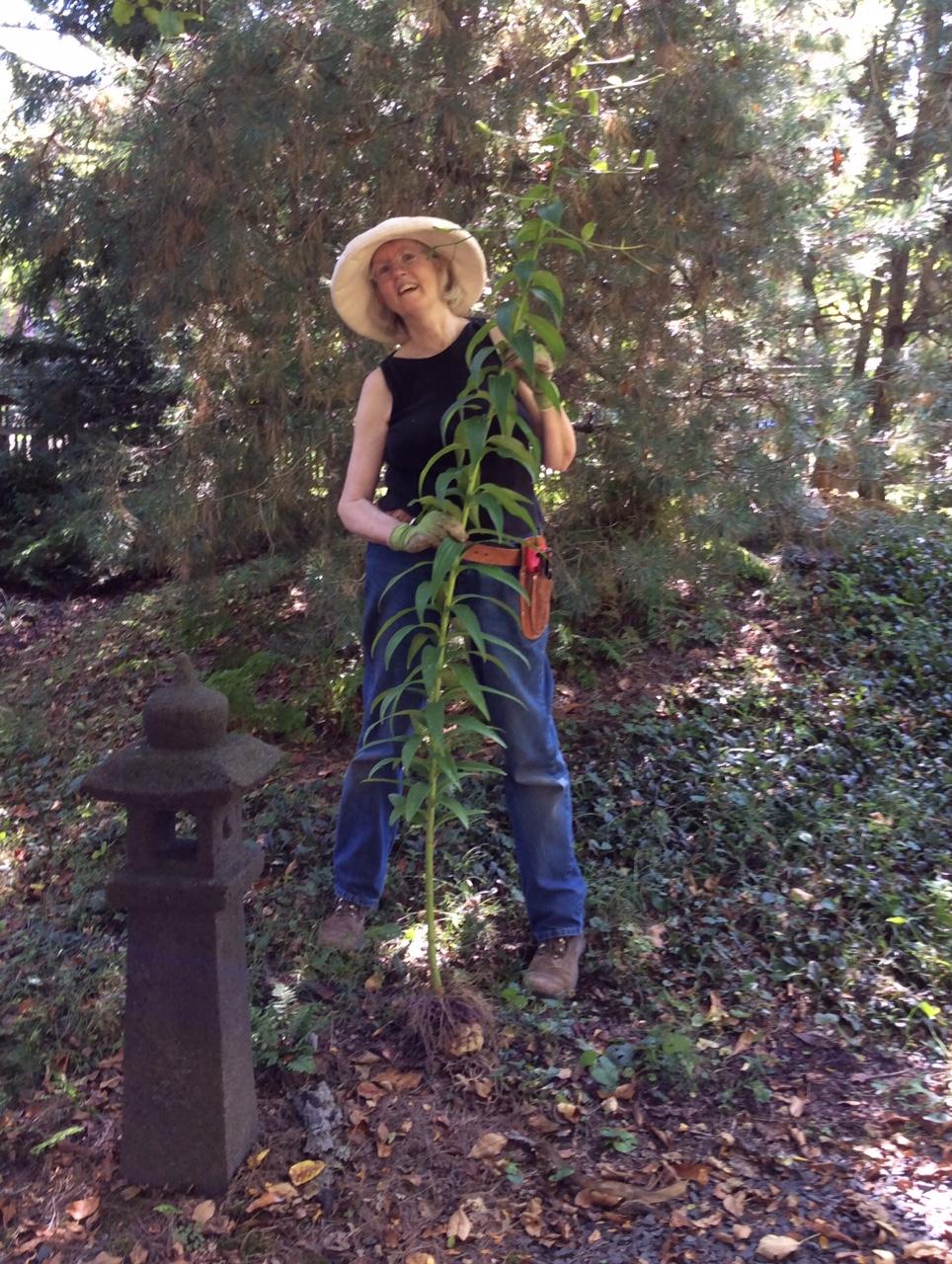 Solstice Swirl At Olbrich Botanical >> Each Little World Bulbs