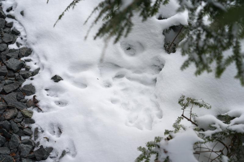 Egungun and Snow-18
