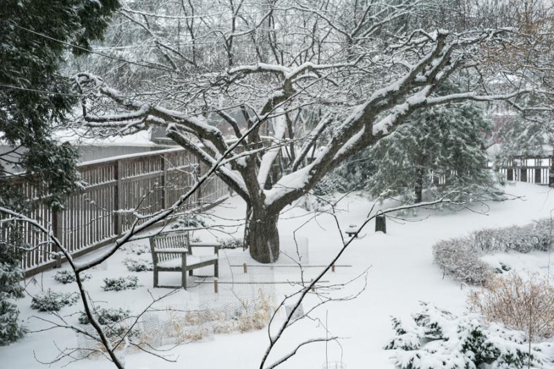 Last Snow-1