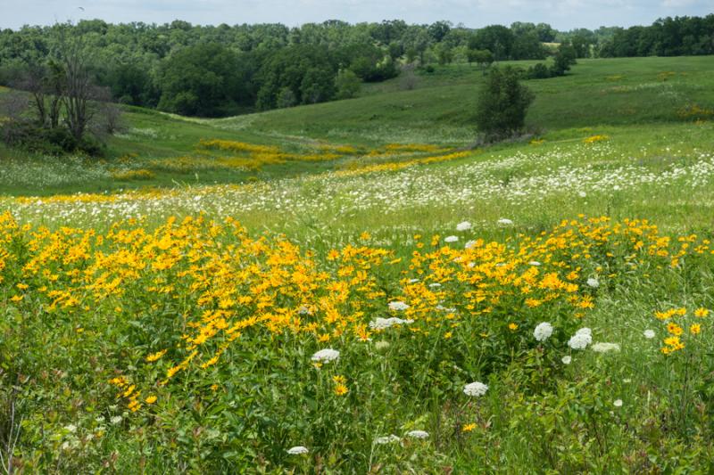 Prairie views-1