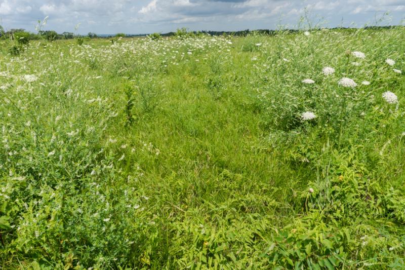 Prairie views-4