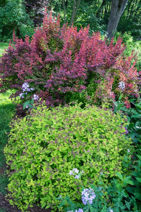 HPS Gardens-7