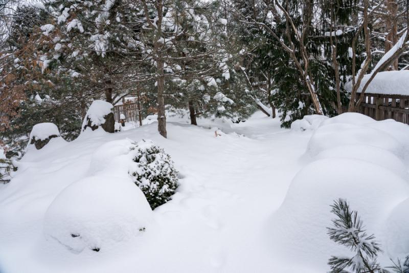 Egungun and Snow-26