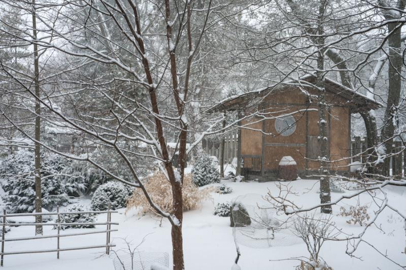 Last Snow-5