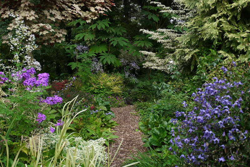 22-The-Woodland-Garden