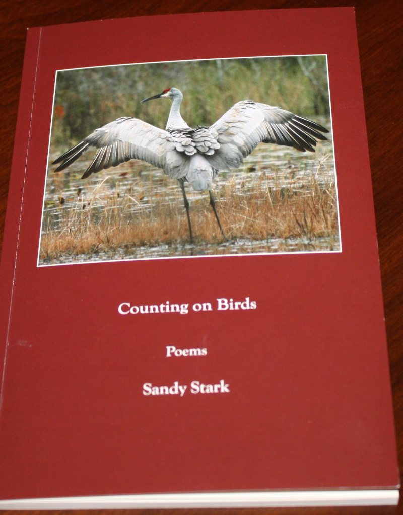 Counting-on-birds