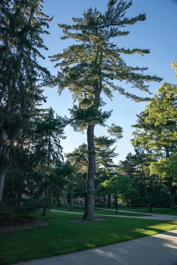 Notre Trees-3