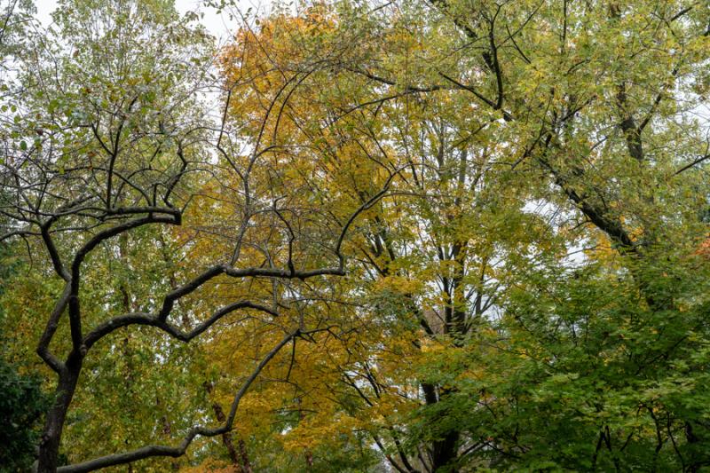 Fall Yellow 2018-15