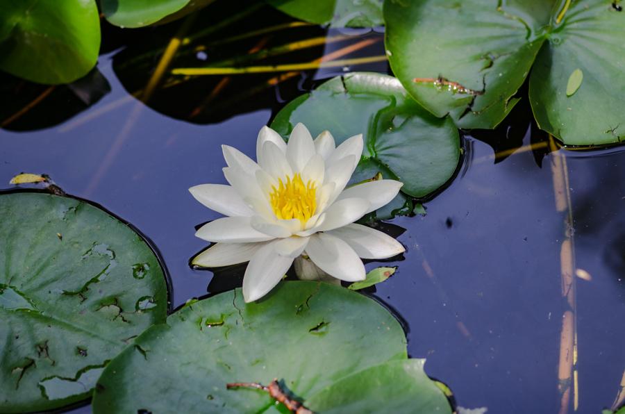 Solstice Swirl At Olbrich Botanical >> Each Little World Water Gardens