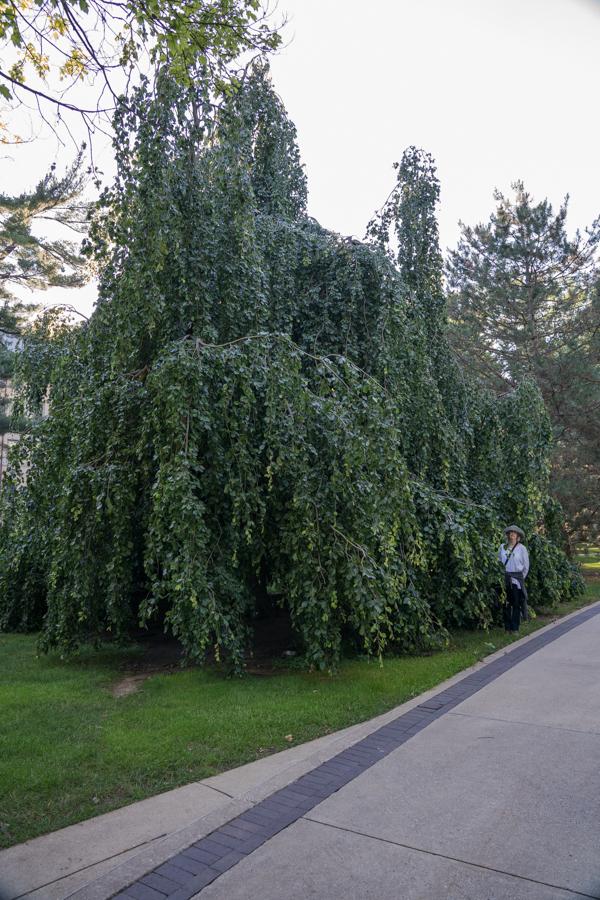 Notre Trees-2