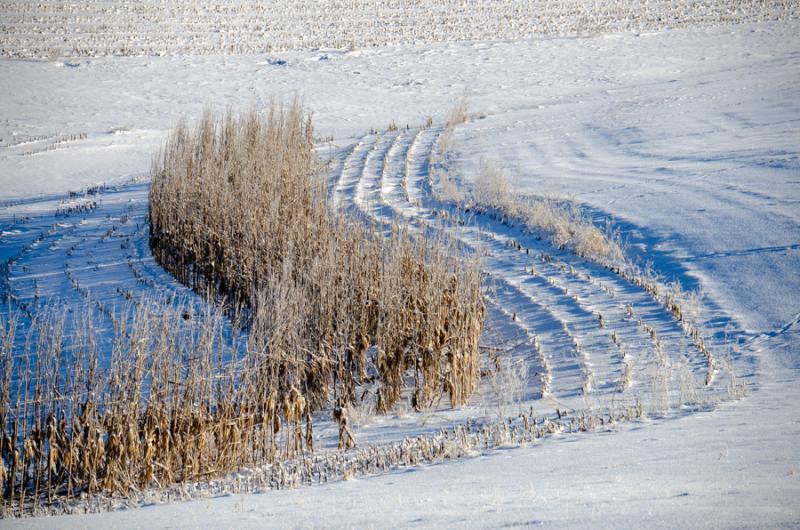 COR - Snow-7