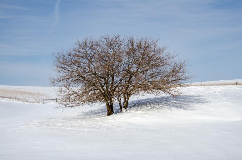 COR - Snow-10