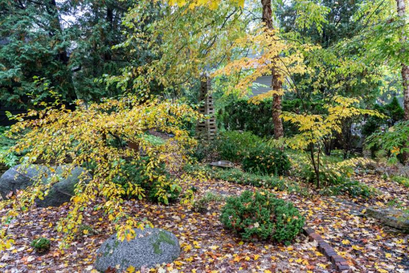 Fall Yellow 2018-6