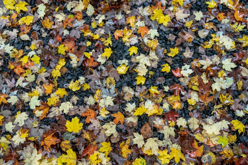 Fall Yellow 2018-5