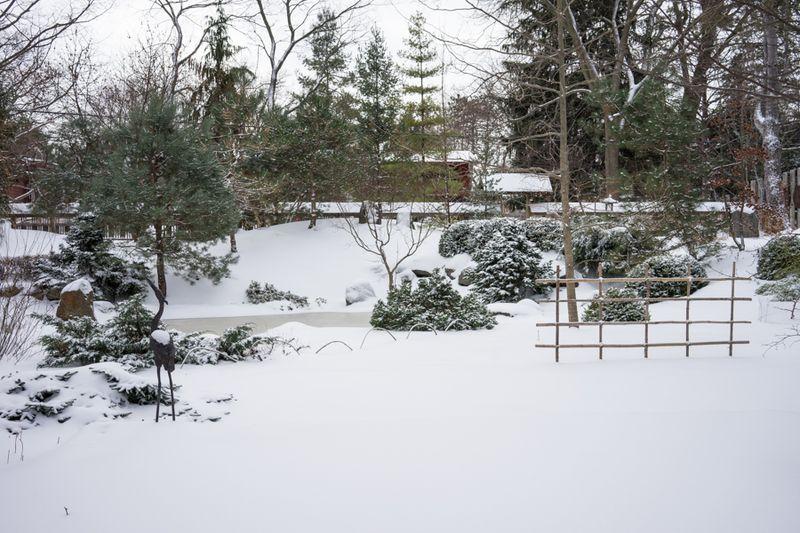Dec Snow-4