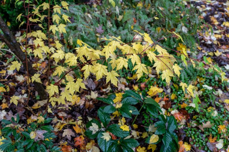 Fall Yellow 2018-4