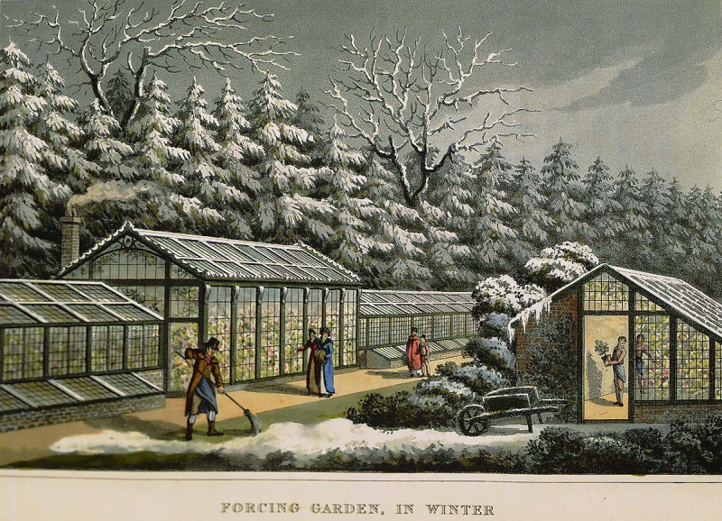Greenhouse winter