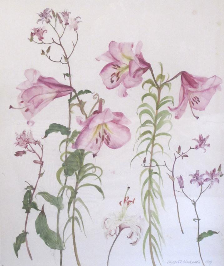 Blackadder-Pink-Lilies-cropped