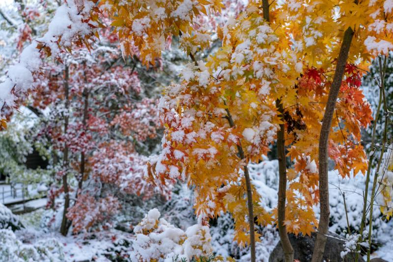 1st Snow 19-11