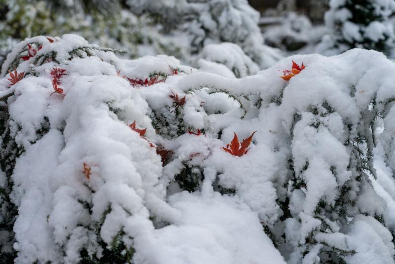 1st Snow 19-9