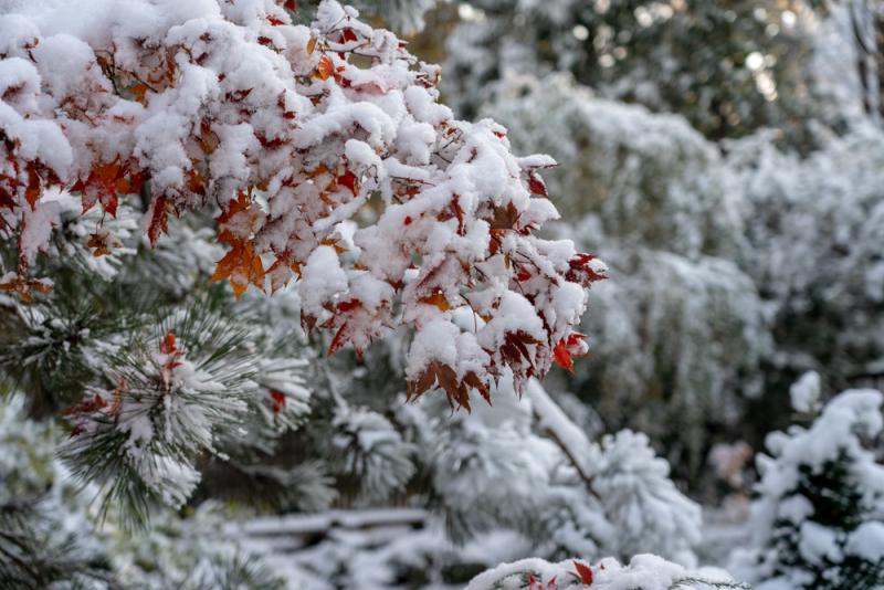 1st Snow 19-8
