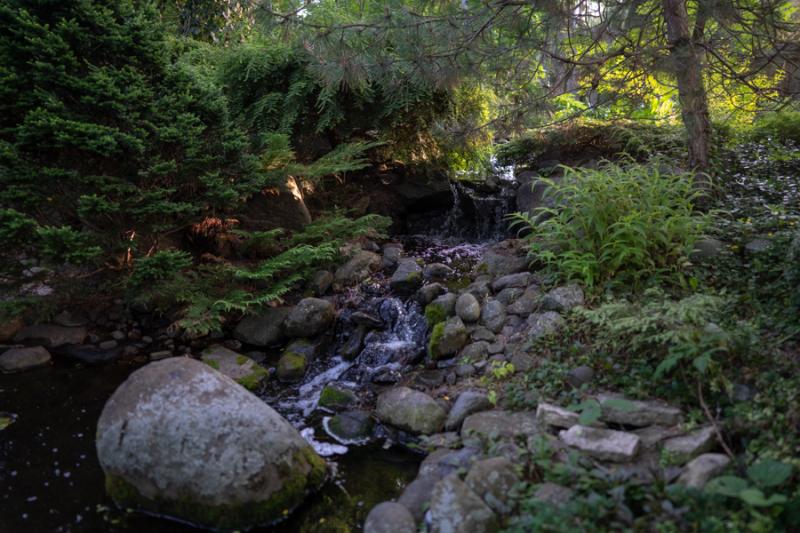 Evening in Garden-2