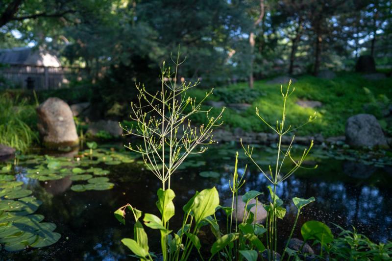 Evening in Garden-1-2