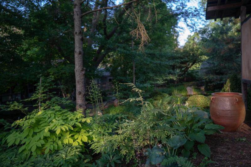 Evening in Garden-11