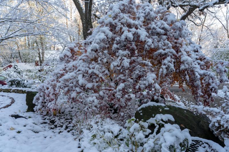 1st Snow 19-15