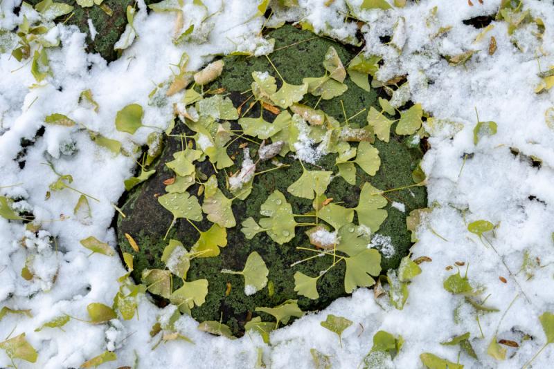 1st Snow 19-4