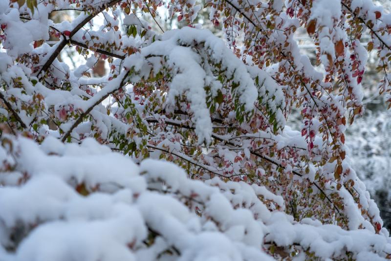 1st Snow 19-14