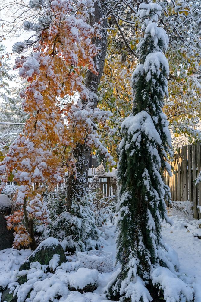 1st Snow 19-12