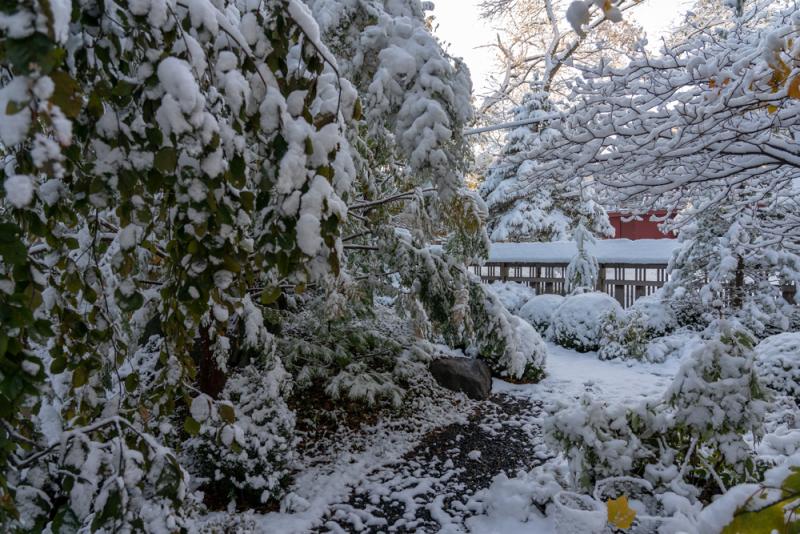 1st Snow 19-10