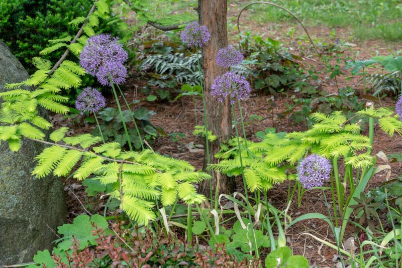 Garden Pinholes-1