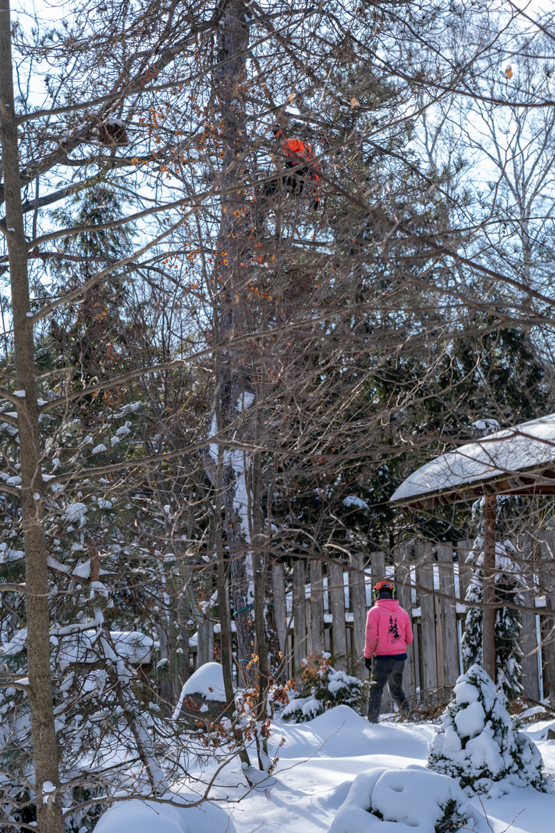 Tree Removal-7