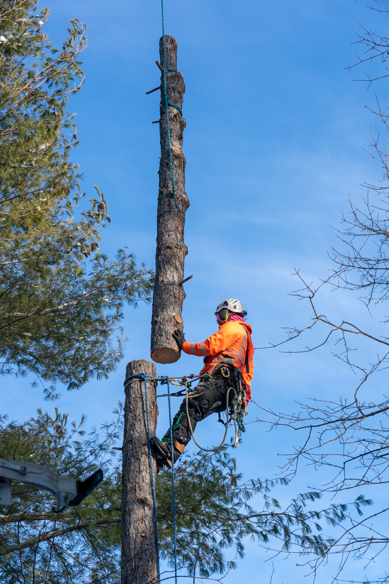 Tree Removal-8