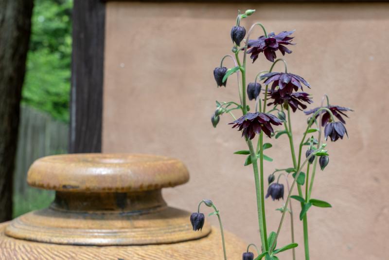 Garden Pinholes-5
