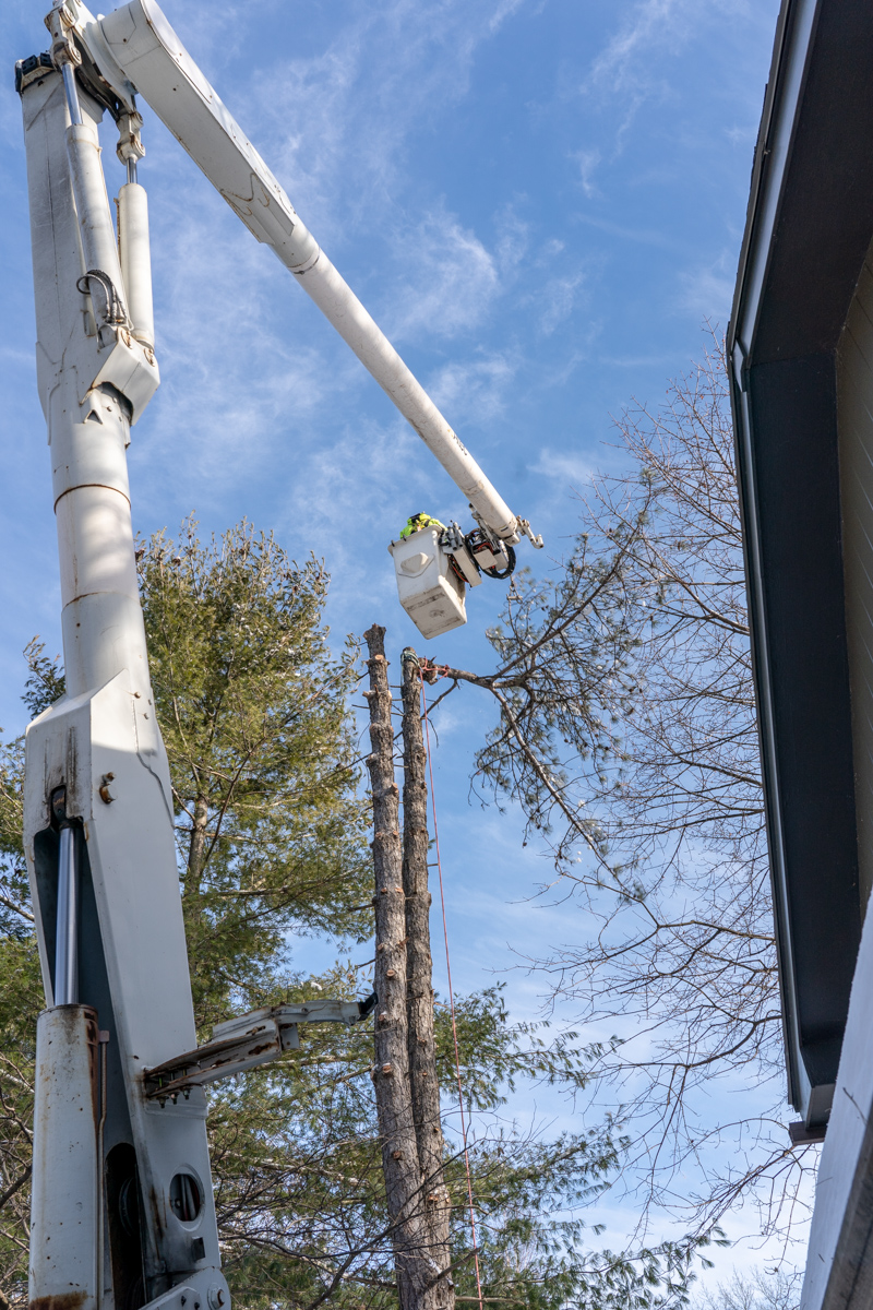 Tree Removal-5