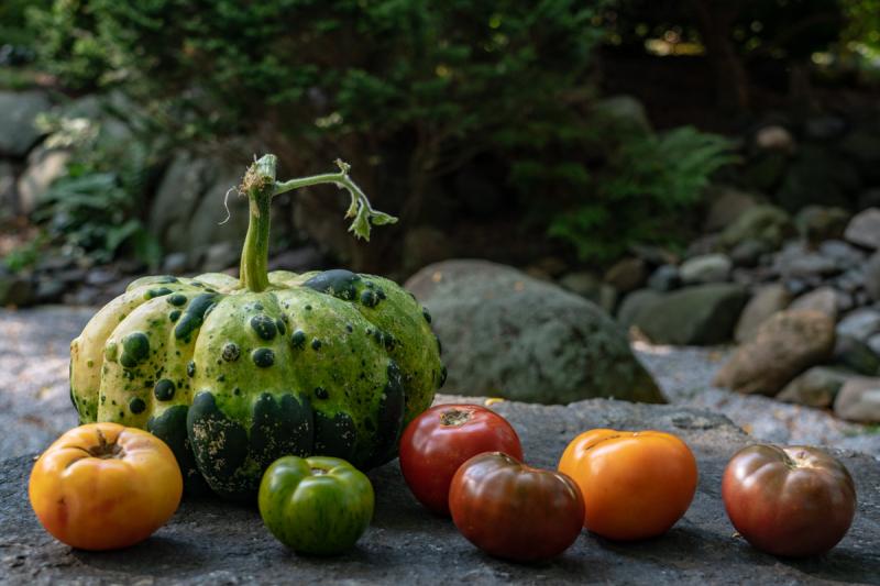 Tomatos (1 of 6)
