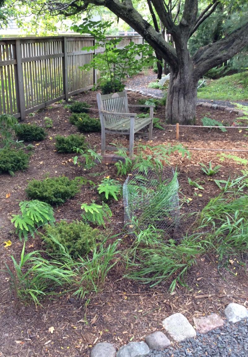 Moss garden w:shrubs