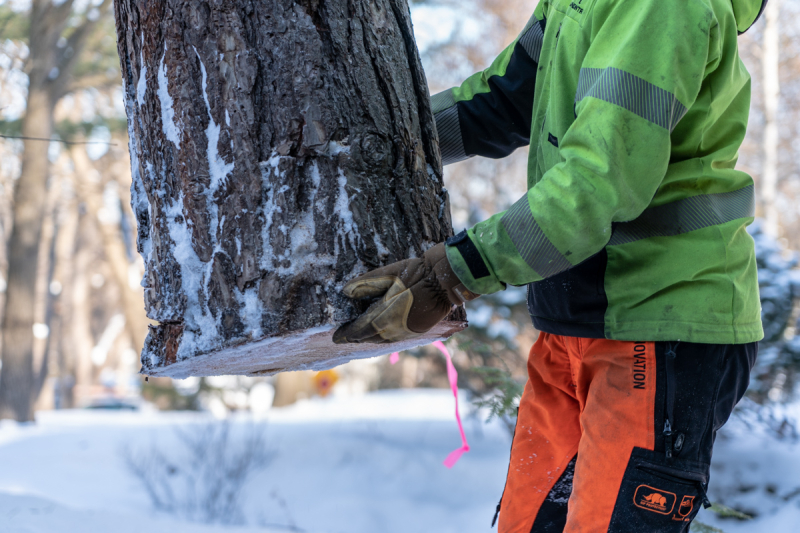 Tree Removal-10