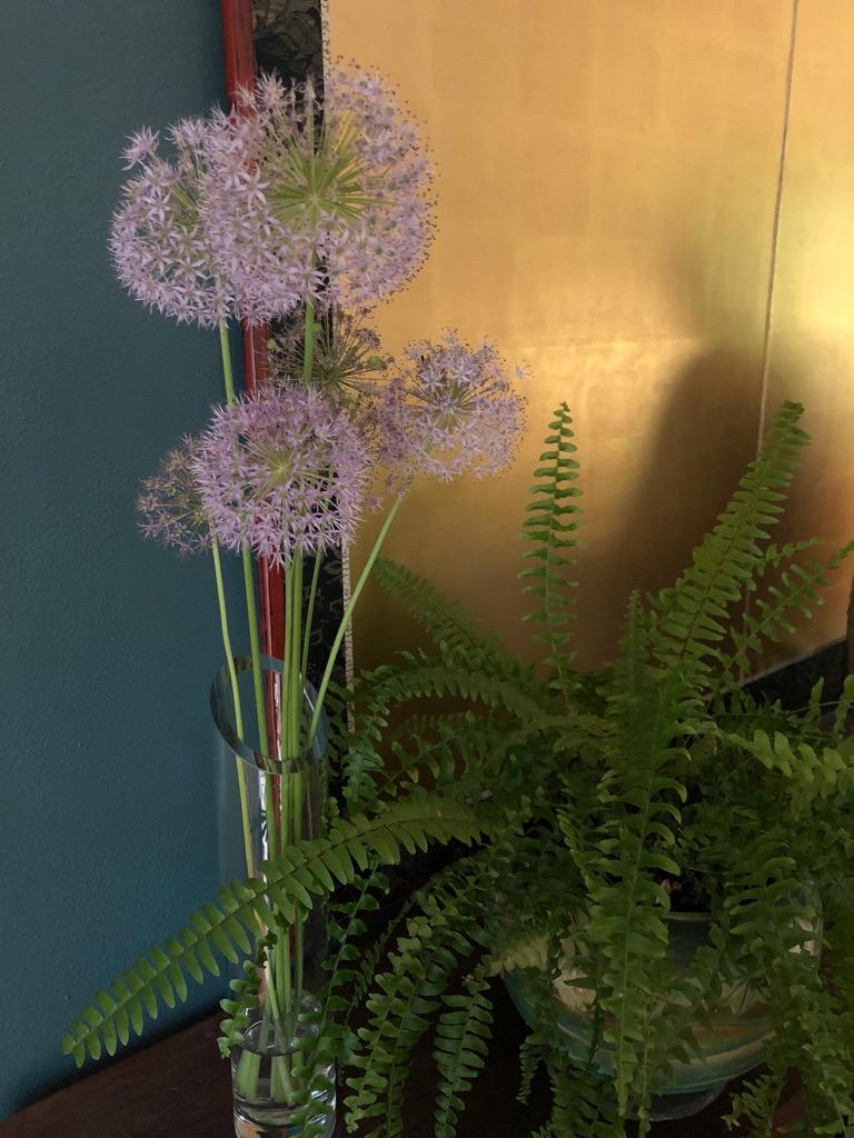 Allium w:Lohan