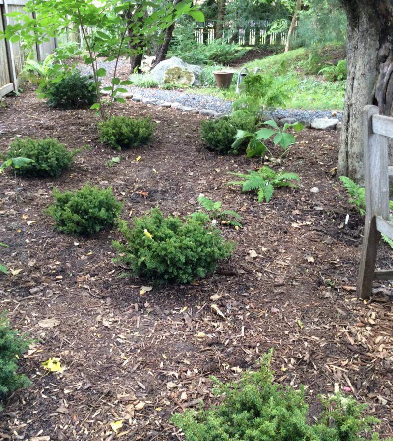 Moss gardenw:shrubs 2