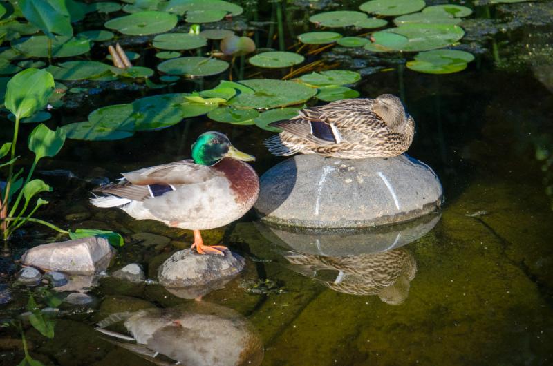 Pond Fill LB (13 of 63)